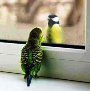 синичка и попугай
