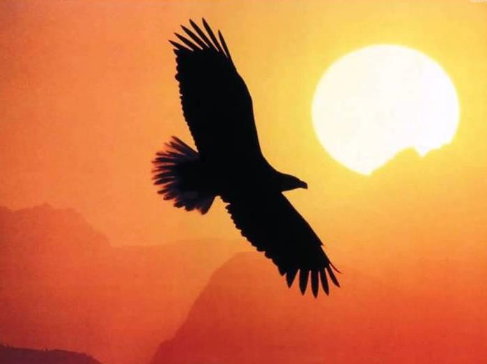 орел летит на закат!