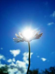 cvetok sveta