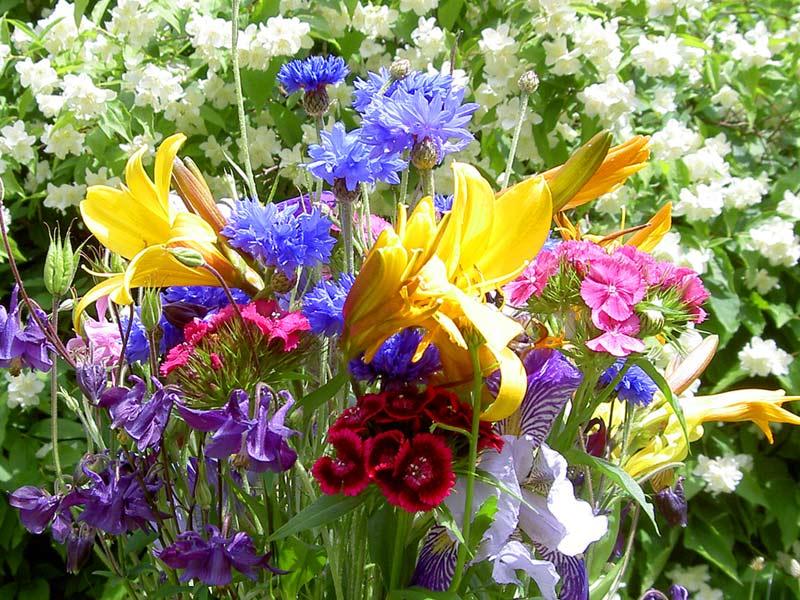 яркие цветы лета