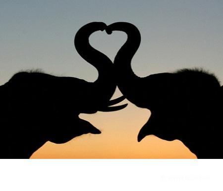 любовь слоники