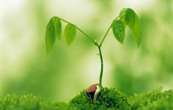 росток лепестки
