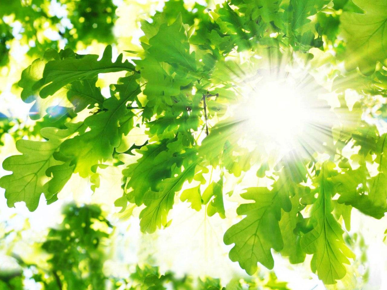 свет солнца листва