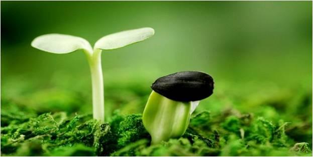 ростки прорастают