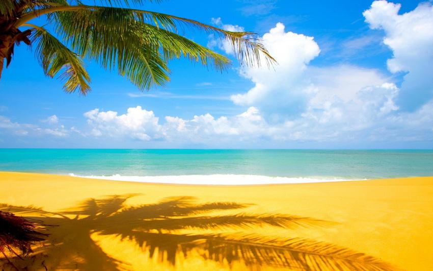sea_palms