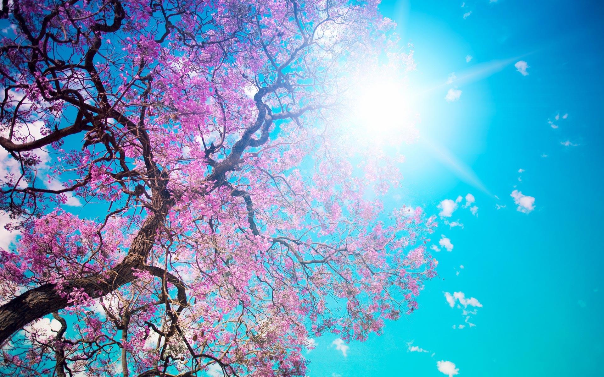 Blooming_spring