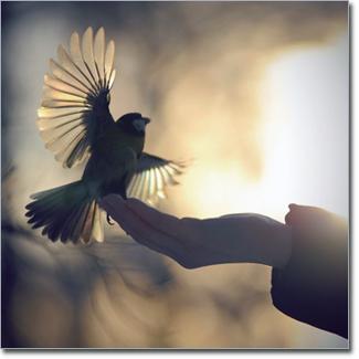 ptichka-v-ruke